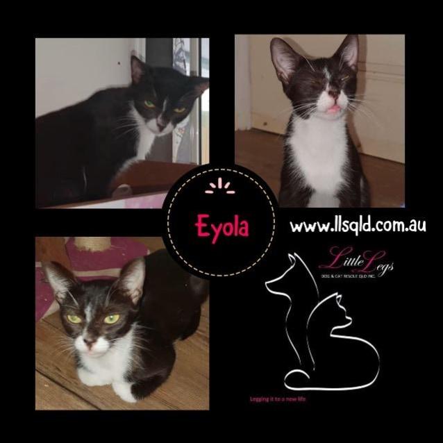 Photo of Eyola