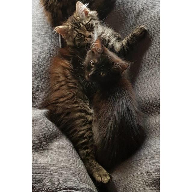 Photo of Gracie & Lala ❤❤