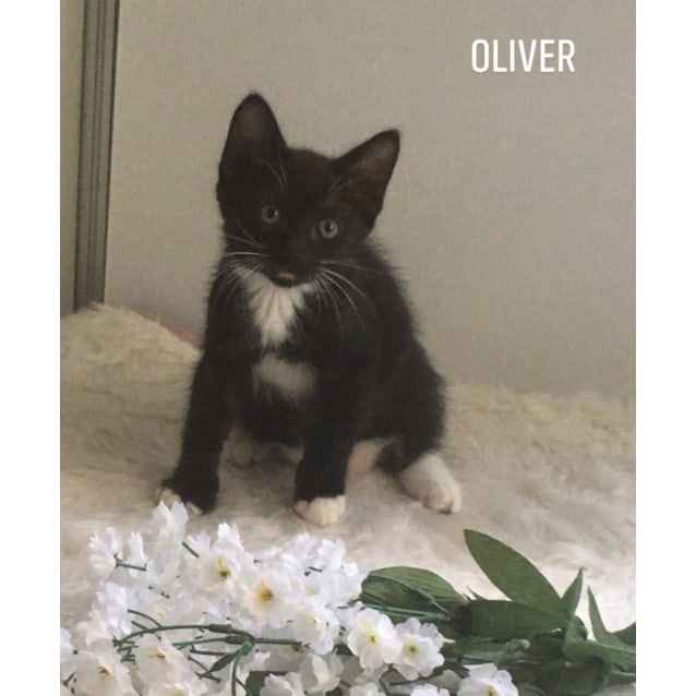 Photo of Oliver