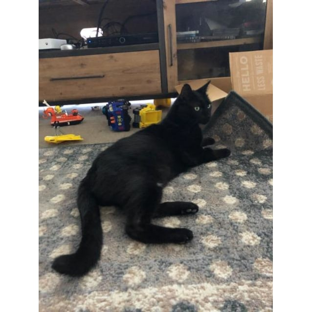 Photo of Panther