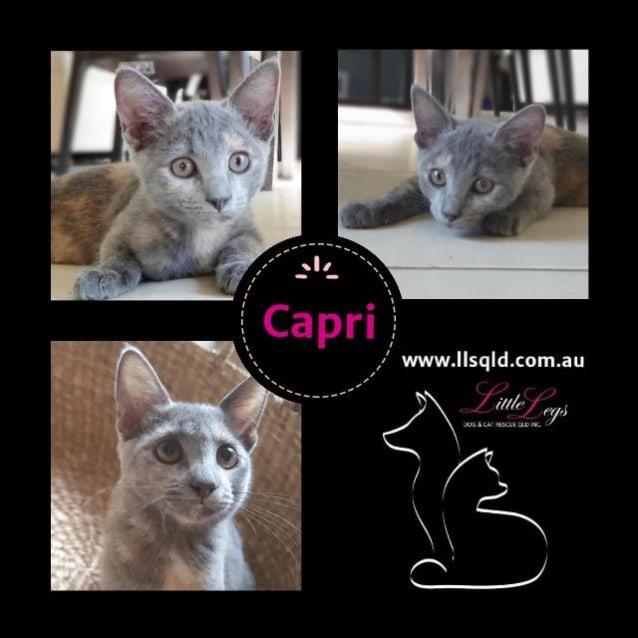 Photo of Capri