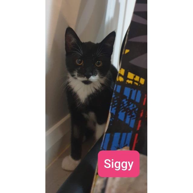 Photo of Siggy