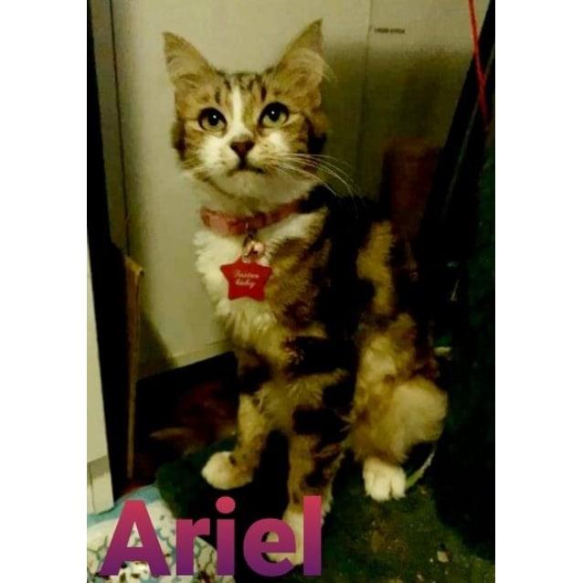 Photo of Ariel
