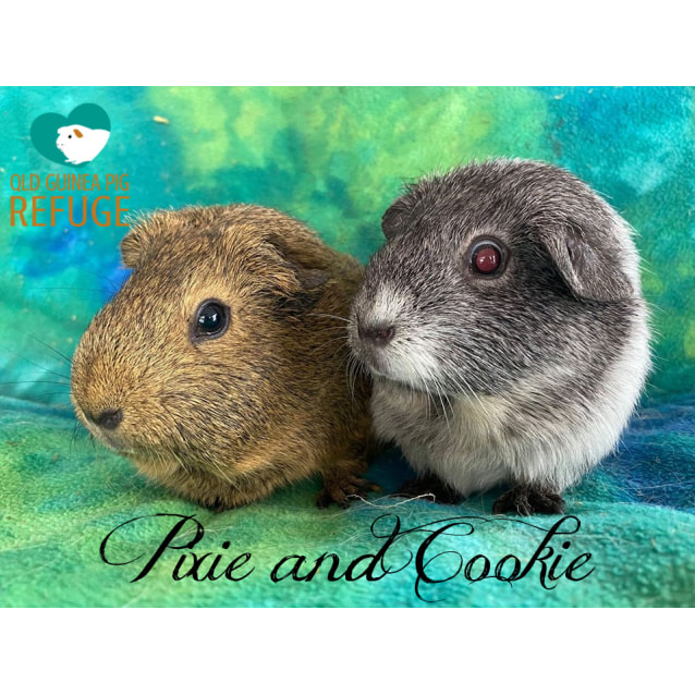 Photo of Pixie And Cookie