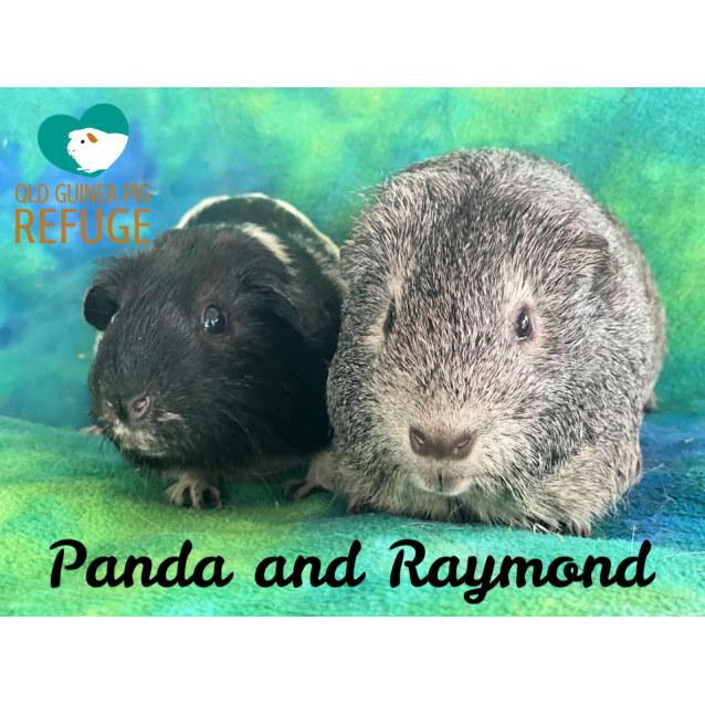 Photo of Panda And Raymond (Desexed Male)