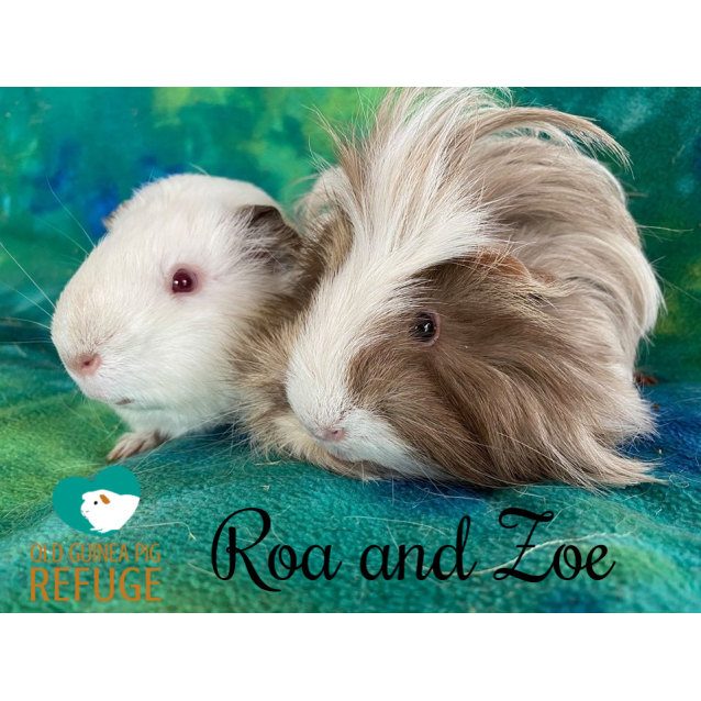 Photo of Roa (Desexed Male) And Zoe (Indoor Home Only)