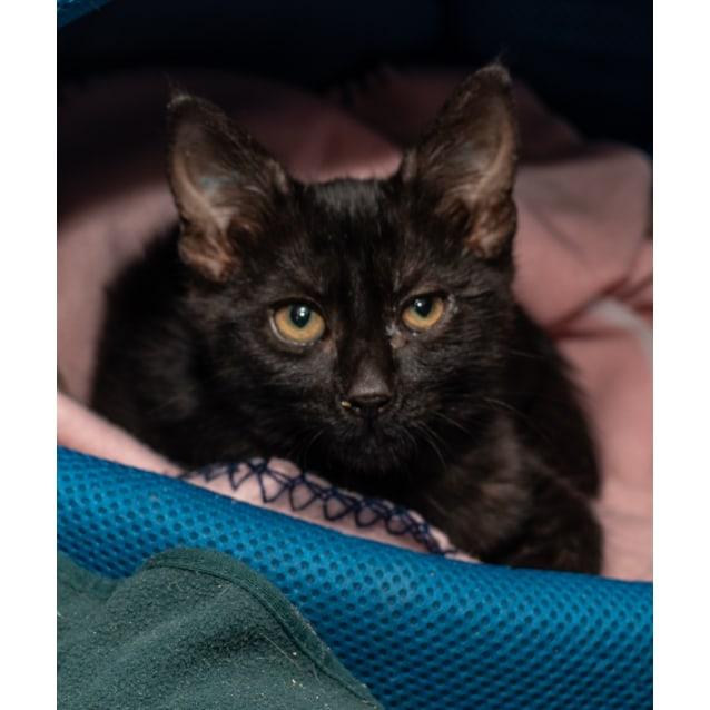 Photo of Lolita