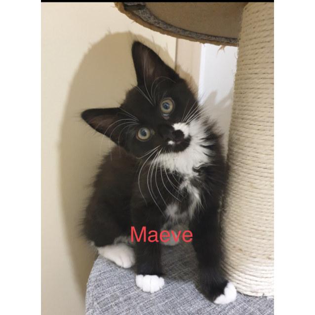 Photo of Maeve