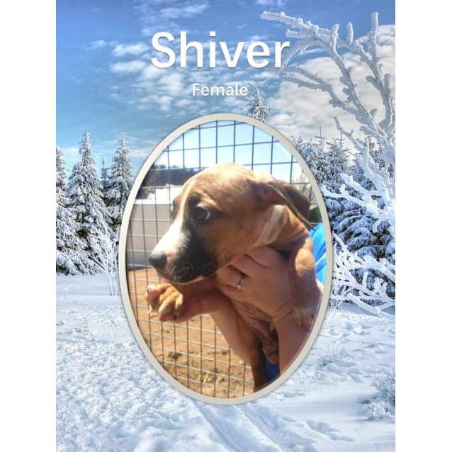 Photo of Shiver