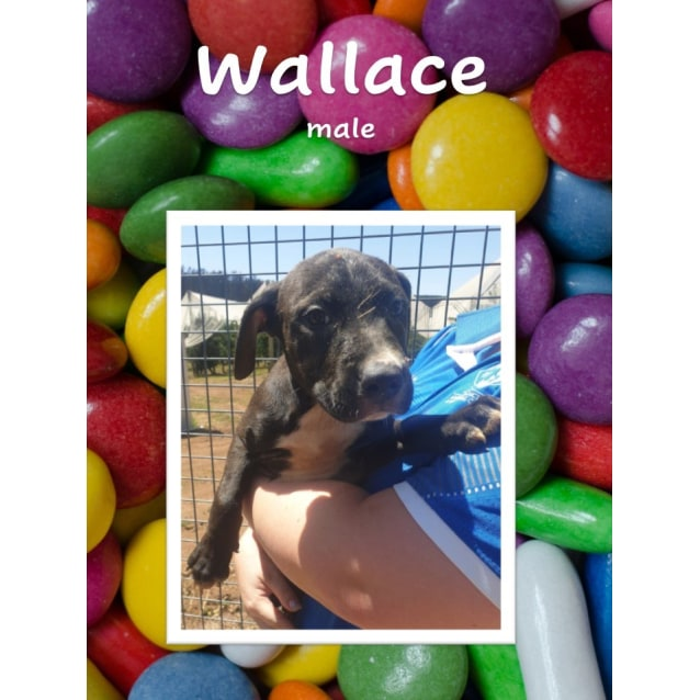 Photo of Wallace