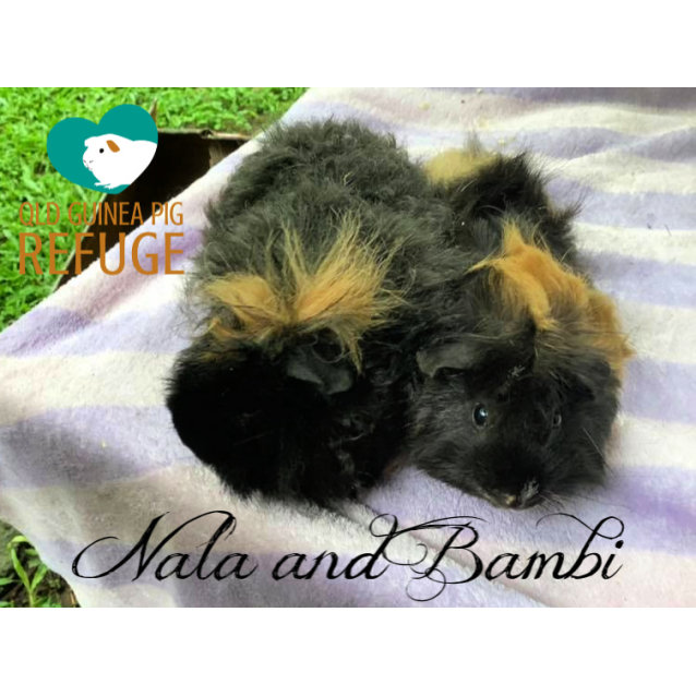 Photo of Nala And Bambi (Indoor Home And Older Kids Only)