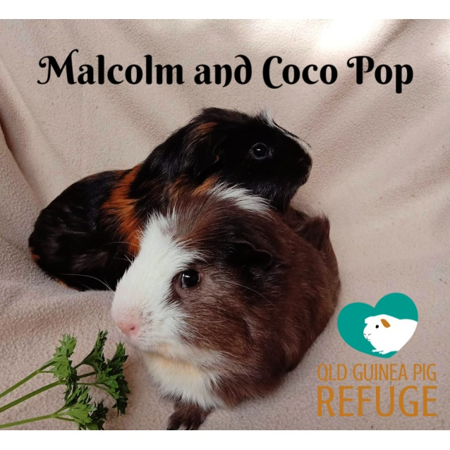 Photo of Malcolm And Coco Pop