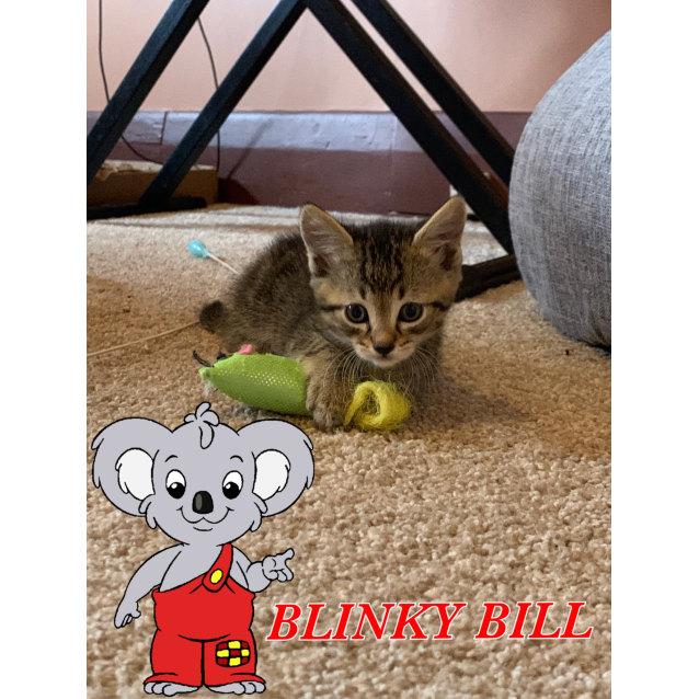 Photo of Blinky Bill