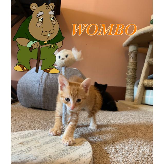 Photo of Wombo