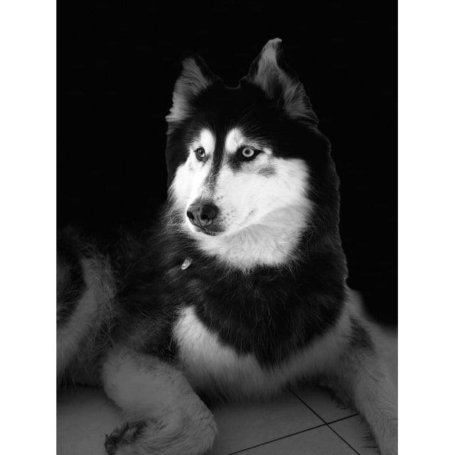 Photo of Sasha