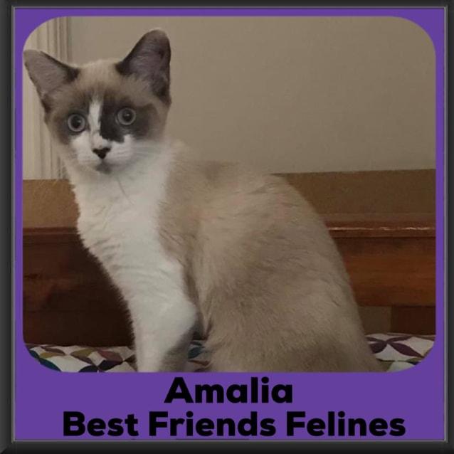 Photo of Amalia