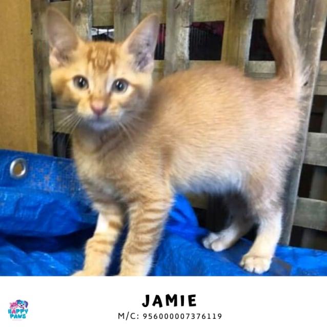 Photo of Red Jamie