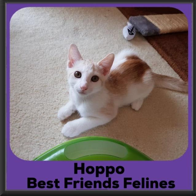 Photo of Hoppo