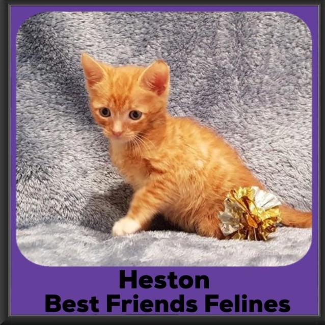 Photo of Heston