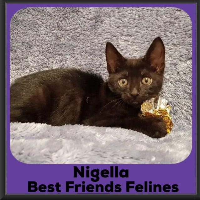 Photo of Nigella