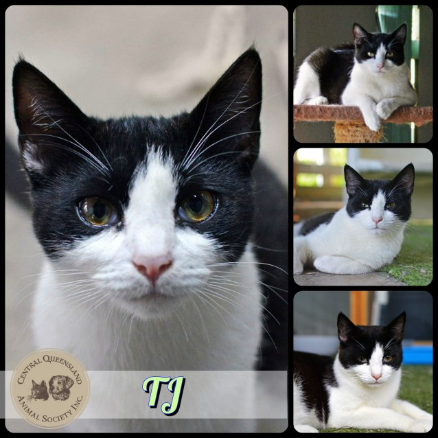 Photo of Tj