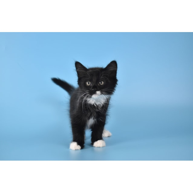 Photo of Darth Meow