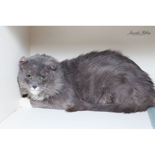 Photo of 1720   Whiskers Stallone