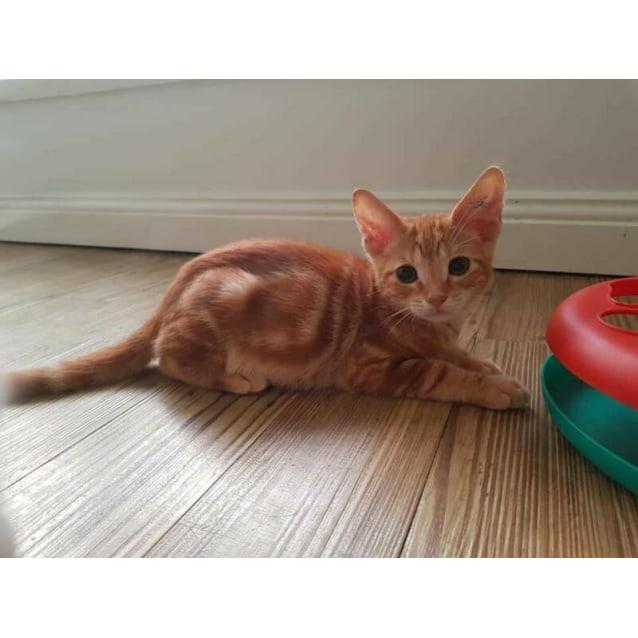 Photo of Rowley