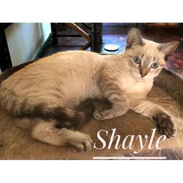 Photo of Shayle