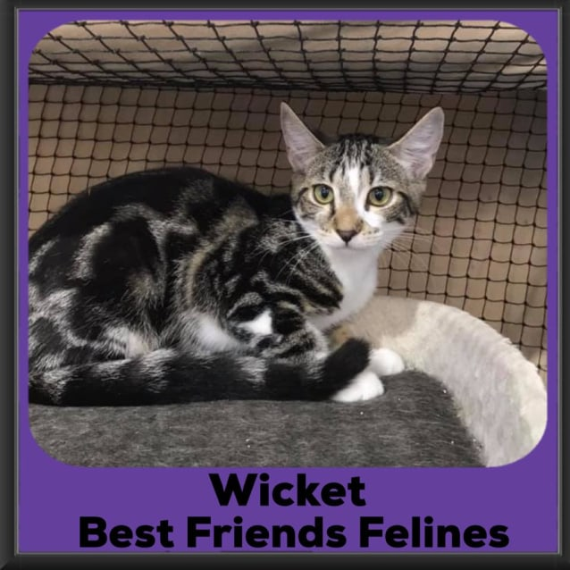 Photo of Wicket