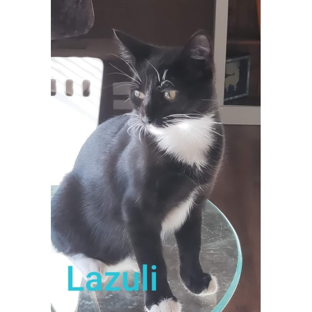 Photo of Lazuli