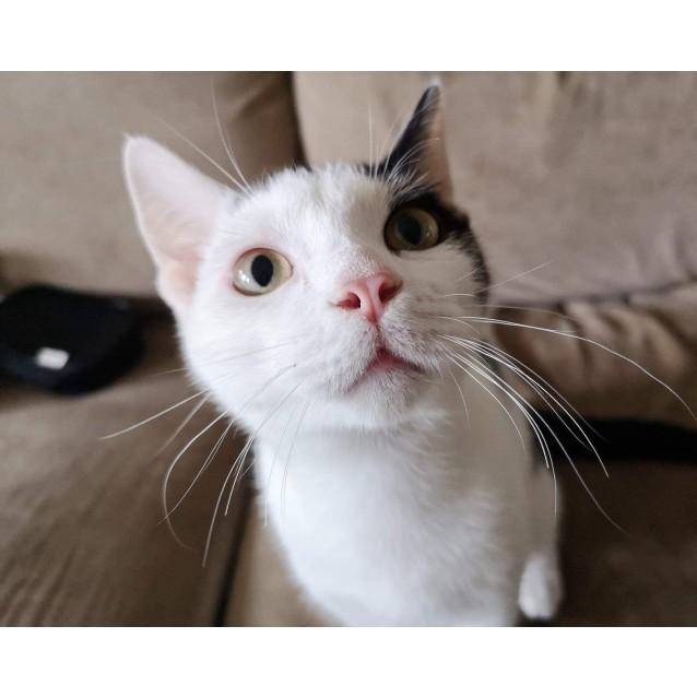 Photo of Zoro ⚡️