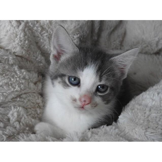 Photo of Kedi