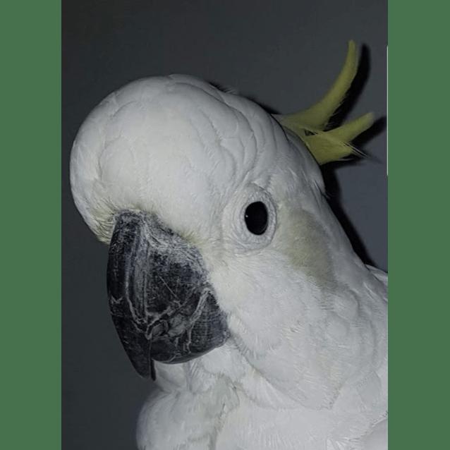 Photo of Clancy