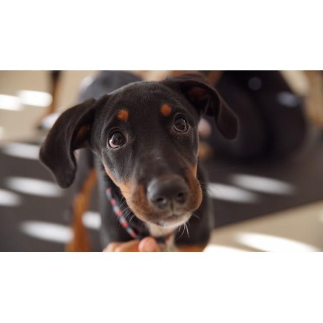 Photo of Puppy Nellie Dl2387