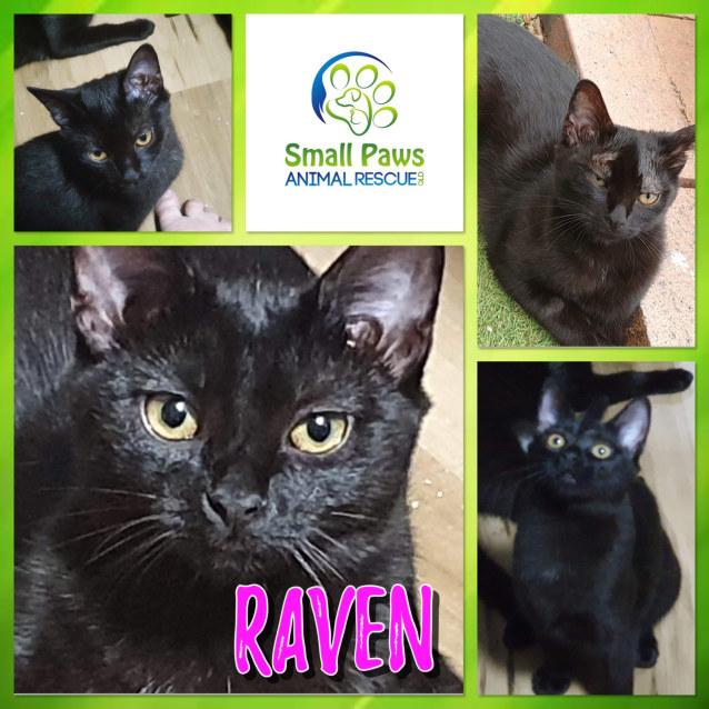 Photo of Raven