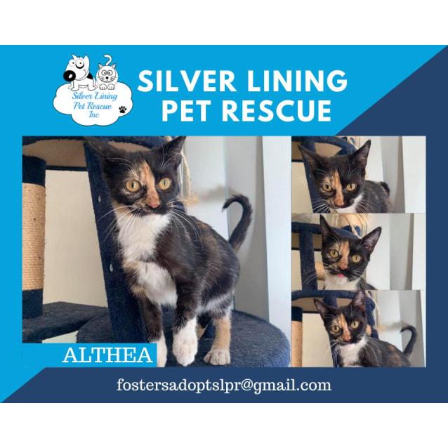 Photo of Althea