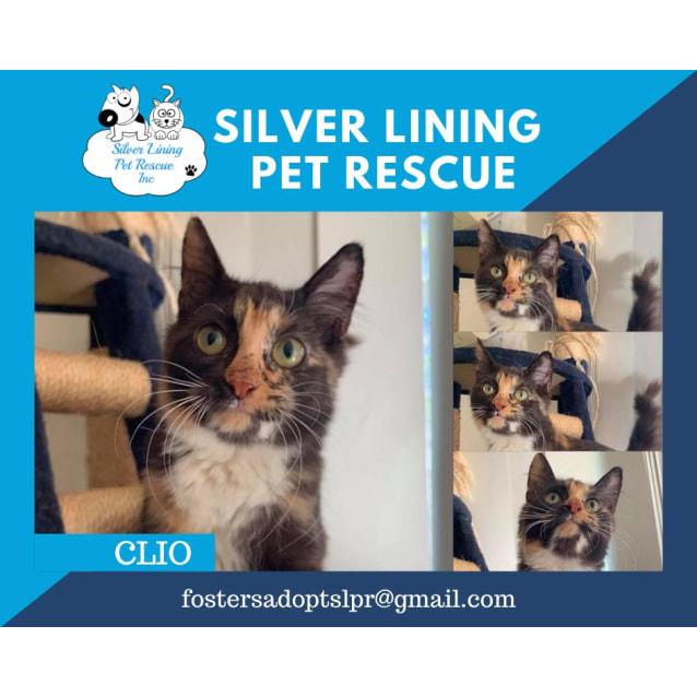Photo of Clio
