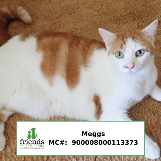 Photo of Meggs