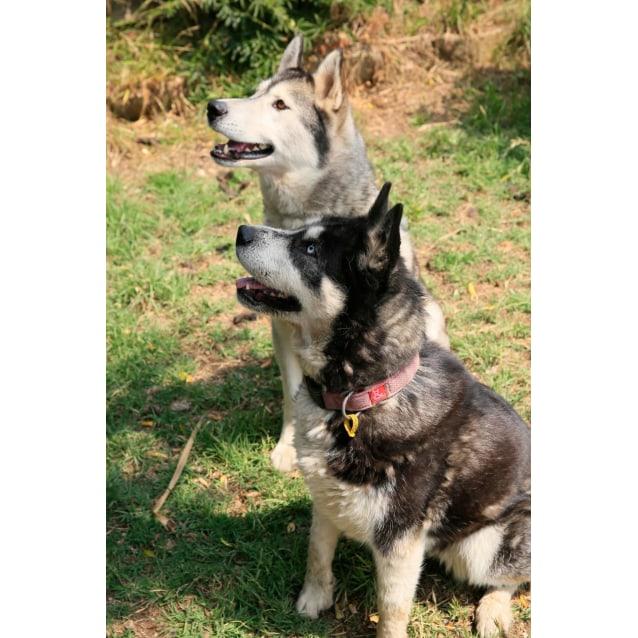 Photo of Cooper & Zoe