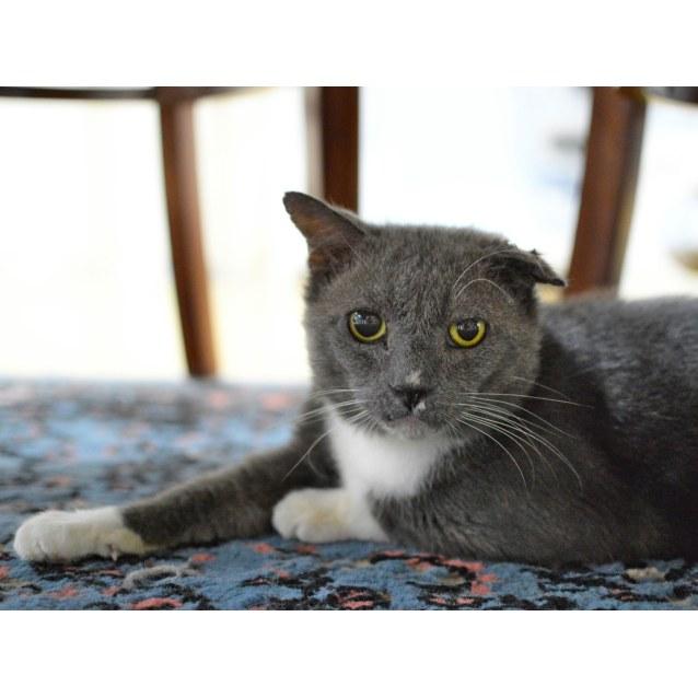 Photo of Collie