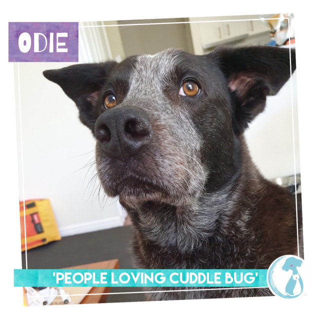Photo of Odie