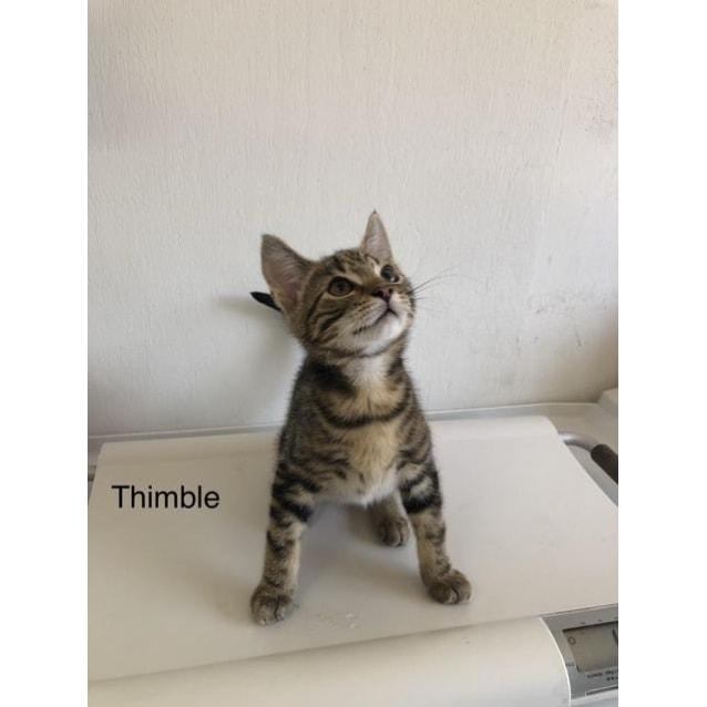 Photo of Thimble