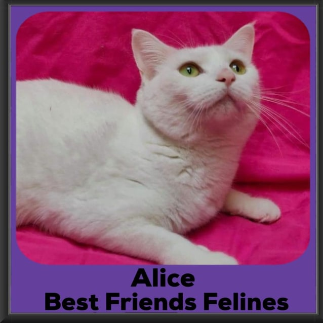 Photo of Alice