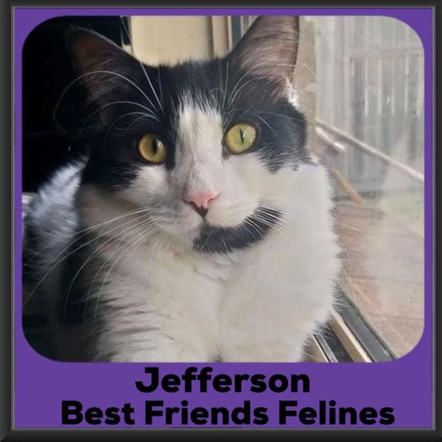 Photo of Jefferson