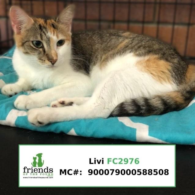 Photo of Livi