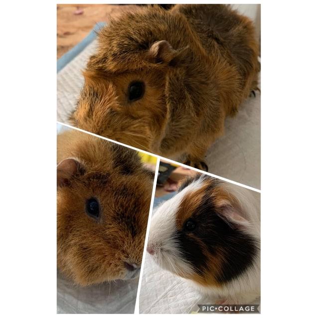 Photo of Fuzzball, Bristle & Poppy