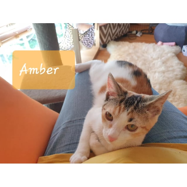 Photo of Adorable Amber