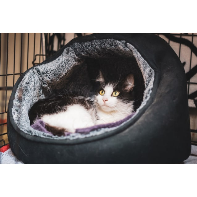 Photo of Pumpkin ~ 10 Year Old Female Cat (On Trial 16/4/20