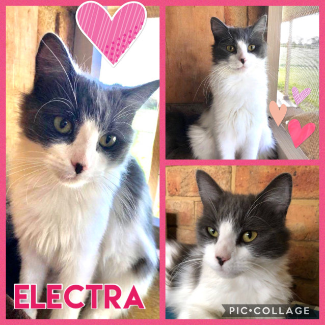 Photo of Electra